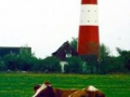 Pellworm-Leuchtturm-191x300